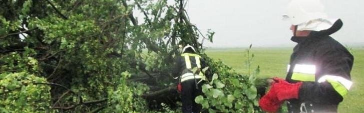 Негода у Хмельницькому: повалені дерева та підтоплені будинки (ФОТО, ВІДЕО)