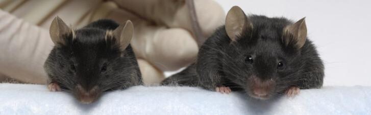 """На Землю з космосу прибули """"могутні миші"""". NASA у захваті"""
