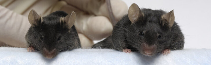 """На Землю из космоса прибыли """"могучие мыши"""". NASA в восторге"""