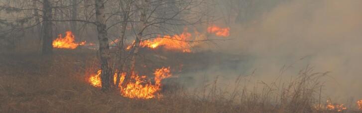 Через випалювання сухої трави постраждали троє мешканців Житомирщини