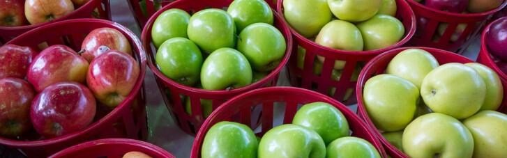 Мільйони на яблуках. Як найбільш міфічний плід став годувальником України