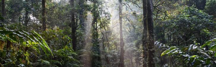 Лише третина тропічних лісів у світі залишилася недоторканою, — звіт екологів