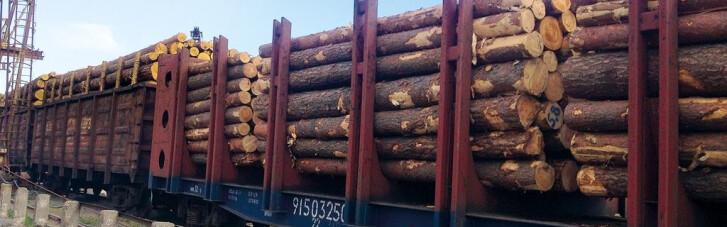 У Зеленського вже хочуть переглянути мораторій на експорт лісу