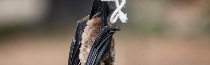 """Bloomberg: у доповіді ВОЗ пролунає назва тварини, яка """"подарувала"""" COVID-19 людині"""