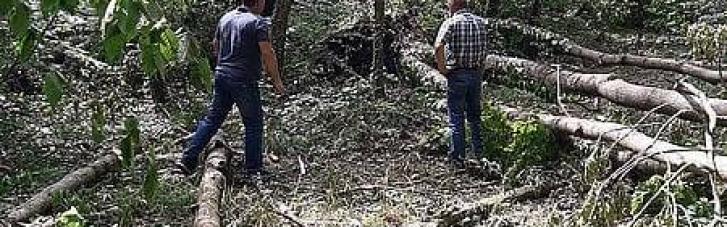 На Хмельниччині буревій поламав дерева на 100 гектарах лісу (ФОТО)