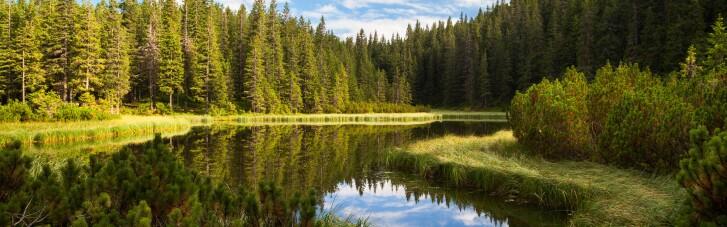 Зеленський наказав жорсткіше карати злочинців у сфері екології