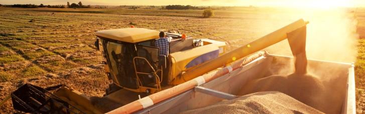 Зерновой джекпот. Сколько валюты заработает наш АПК на рекордном урожае