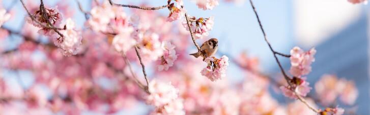 Якою буде погода у квітні: очікування Укргідрометцентру