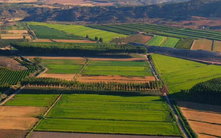Рис у регіоні Арагон