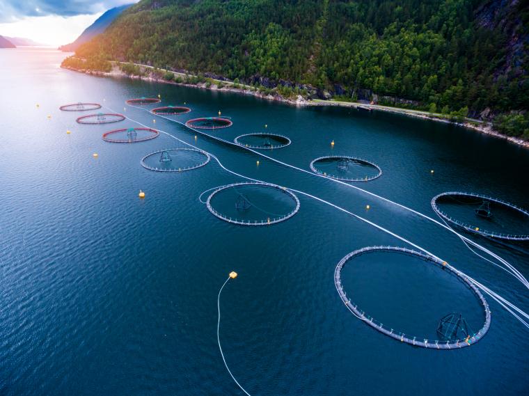 Так выглядит морская лососевая ферма, организованная в Норвегии