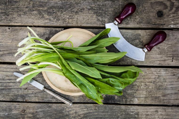 Черемша — дивовижна рослина, за смаком схожа на часник, а за зовнішнім виглядом на листя конвалії