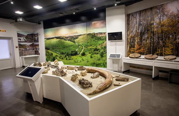 Коллекция Городок-музея. Окаменелости Сарматского моря и бивень мамонта