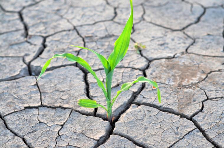 Ми звикли вважати Україну країною з достатньою кількістю водних ресурсів, не помітивши, як стали вододефіцитною економікою