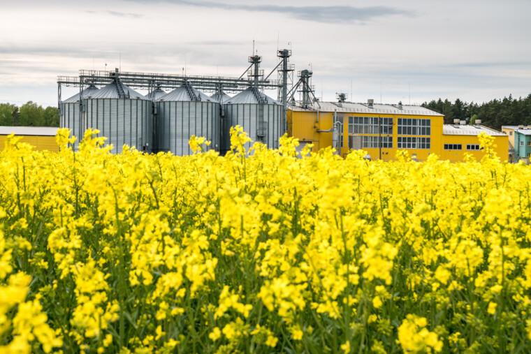 Створення циклу переробки сої та ріпаку в Україні — це експорт приблизно 2 млн т олії і 3 млн т шроту на суму $2,5 млрд в поточних цінах