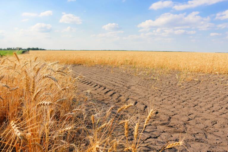Засуха и цены. Чего ждут аграрии от 2020года
