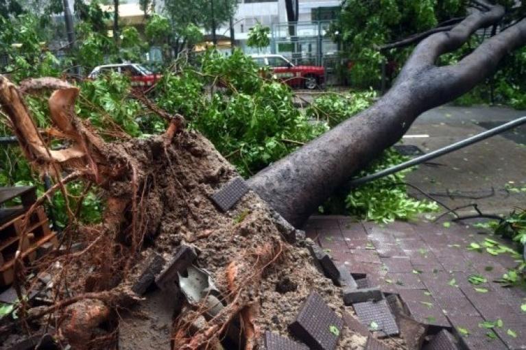 Во время урагана во Львове погибли парень и девушка