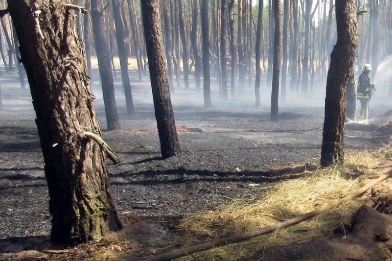 В ГСЧС назвали регионы, где сохраняется чрезвычайная пожарная опасность