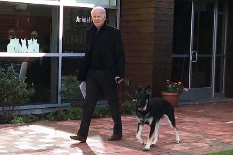 Байден опинився в лікарні з переломами після забавок із собакою (ВІДЕО)