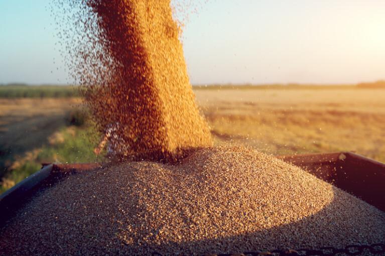 Прокормимся сами.  Как устроена внутренняя торговля агропродукцией в стране (ИНФОГРАФИКА)
