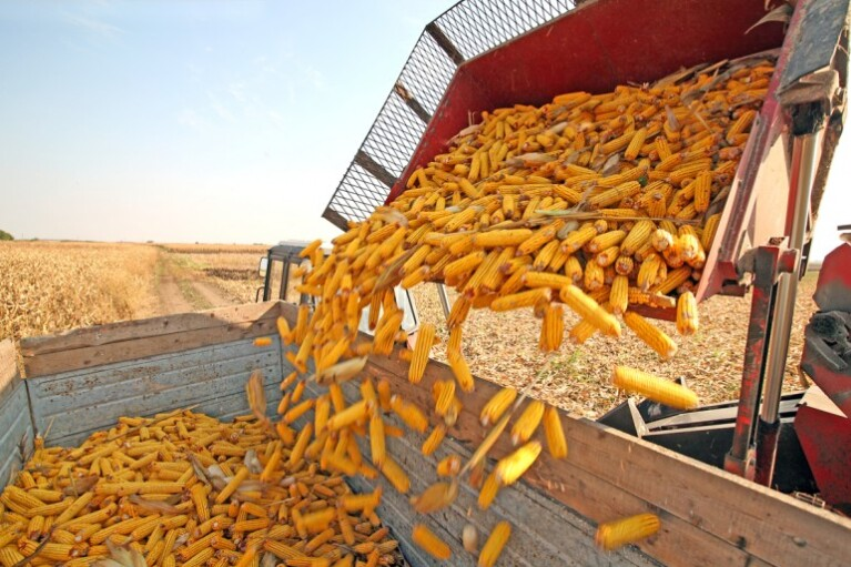 Украинский агробизнес на мировых рынках. Где найти $20 млрд для прорыва