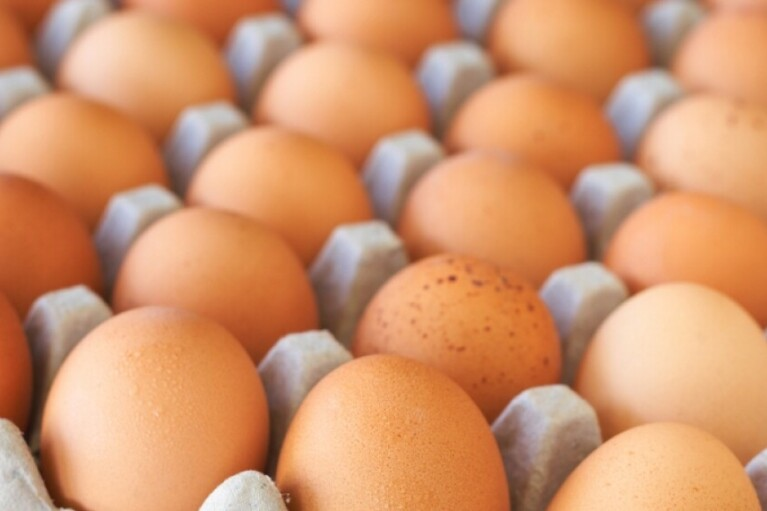 One of the main reasons for the rise in prices for eggs is the pressure of NABU on one of the major producers