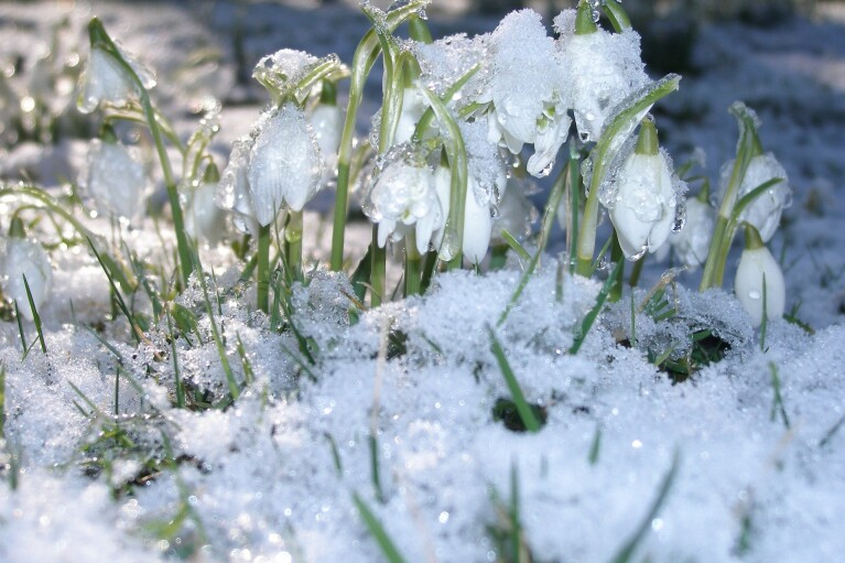 Якою буде погода у березні: прогноз Укргідрометцентру
