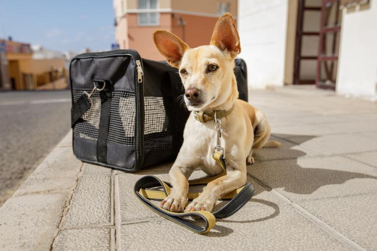 США заборонили ввозити собак з України