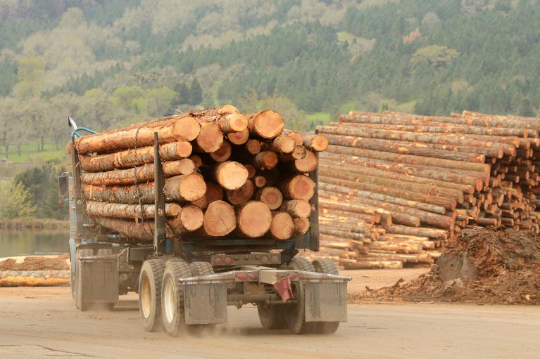 Український ліс-кругляк покотиться в Європу. Що втратить країна