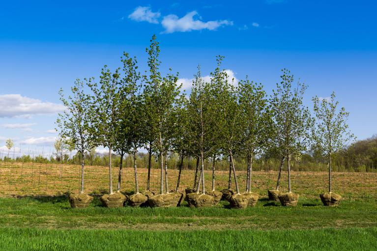 """""""Зеленая страна"""" Зеленского. Спасет ли украинские леса миллиард деревьев"""