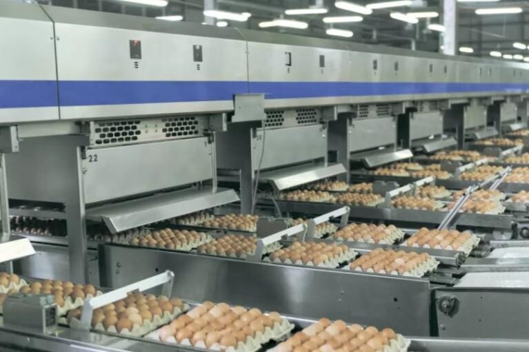 Тиск НАБУ на агрохолдинги може призвести до зростання цін на яйця, - Асоціація постачальників торговельних мереж