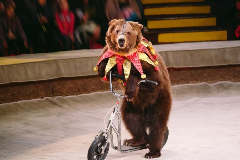 Нардепи хочуть заборонити контактні зоопарки та використання тварин у цирку