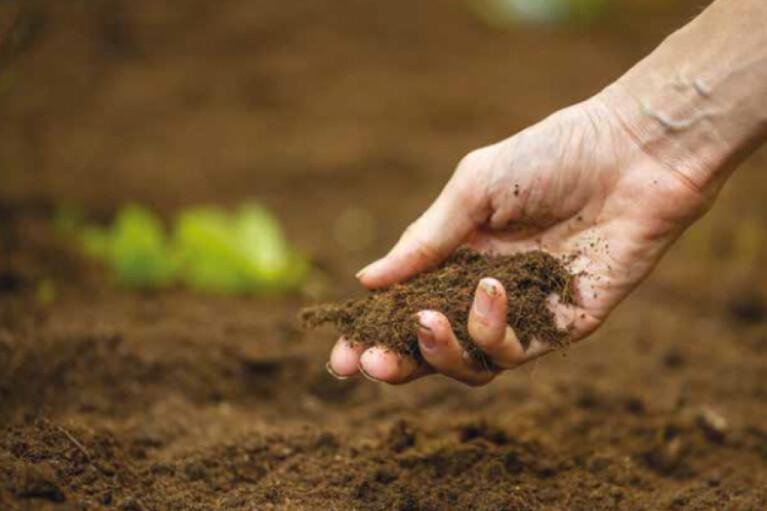 Мораторій на продаж землі рятує чи вбиває Україну? (ОПИТУВАННЯ)