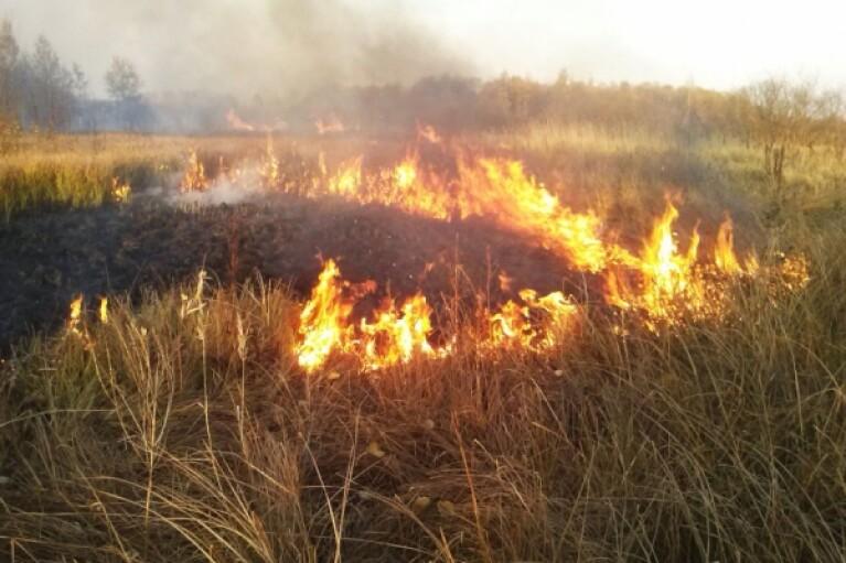 У Луганській області поновилися лісові пожежі (ВІДЕО)