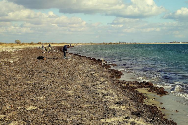 Санврачи просят не купаться на некоторых пляжах Бердянска и пугают эпидемиями