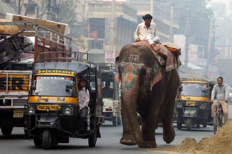 Слон против дракона. Сможет ли Индия стать мотором мировой экономики вместо Китая