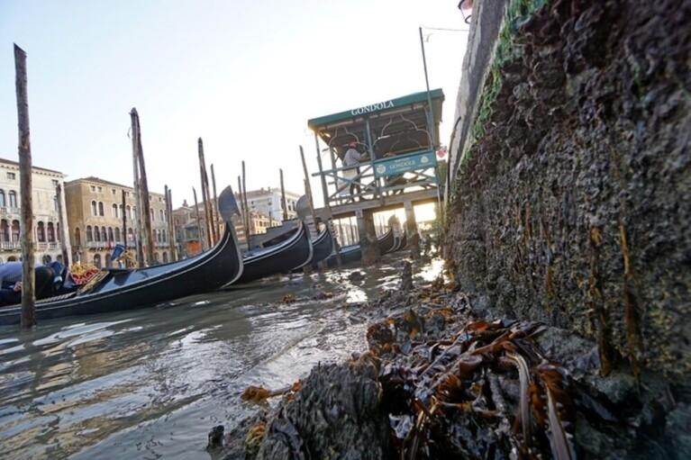 У Венеції через низький приплив висихають канали (ВІДЕО)