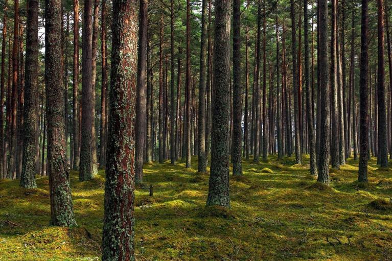 Деревья от Зеленского: стало известно, когда начнут сажать