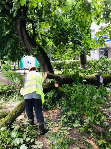 Дерева, що впали, подекуди пошкодили лінії електропередач