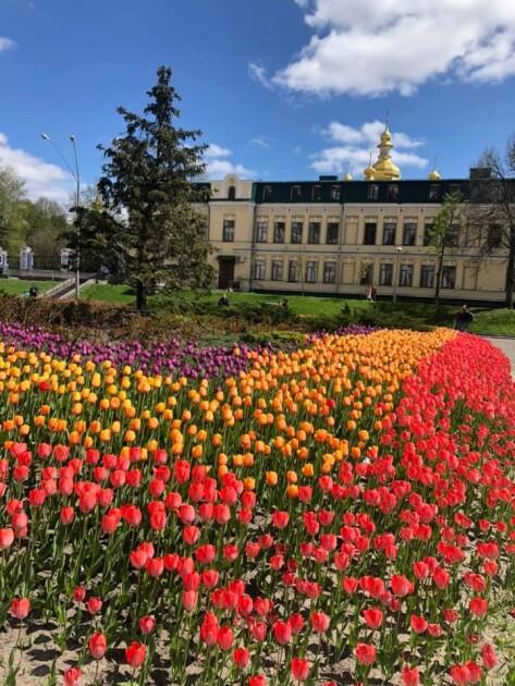 Тюльпани подарувало Почесне консульство України в Амстердамі